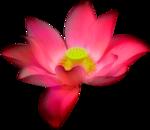GardenOfDreams_el (46).png