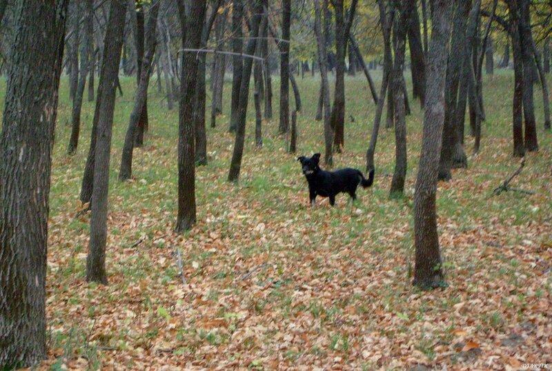 Собака в лесу.
