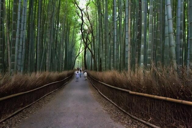 Бамбуковая роща в Киото. Япония