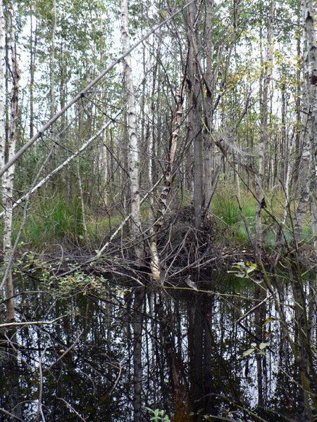 утиное болото