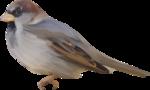 ial_fis_bird1.png