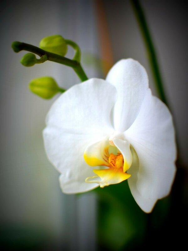 У кого что сейчас цветет в квартире?