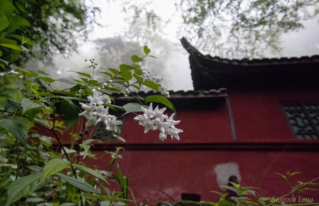 qing cheng shan