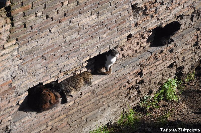 подставка для котов
