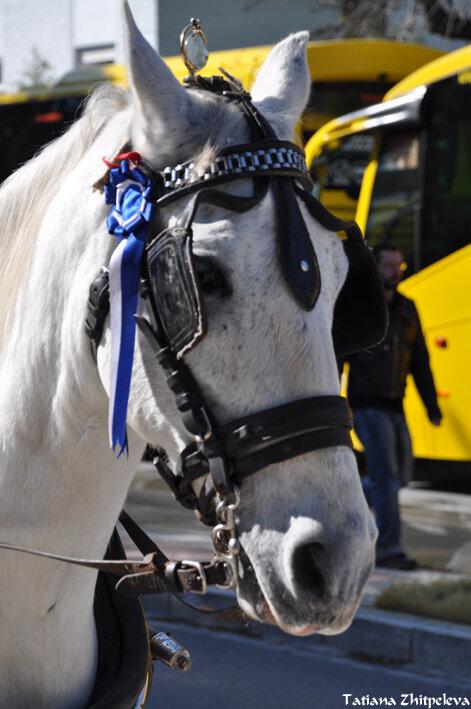 портрет лошади4