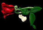 roosjolanafr1.png