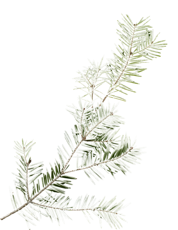 mzimm_snowflurries_firbranch2.png