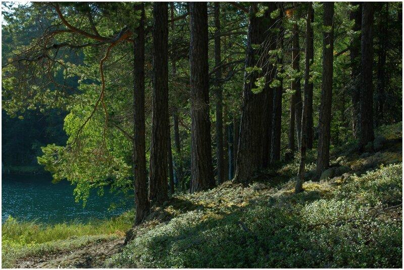 Зеленое озеро. Большой Соловецкий остров