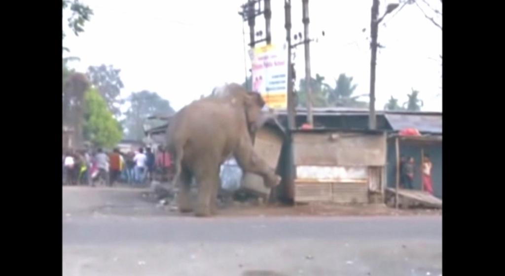 INDIA-ELEPHANT/