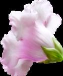 NLD Addon Flower  b.png