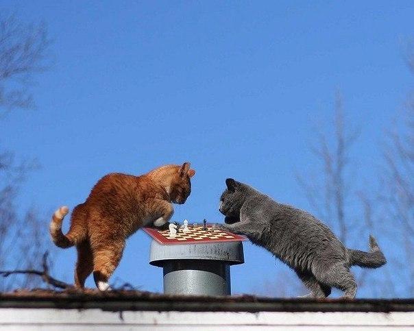 кошки-6.jpg