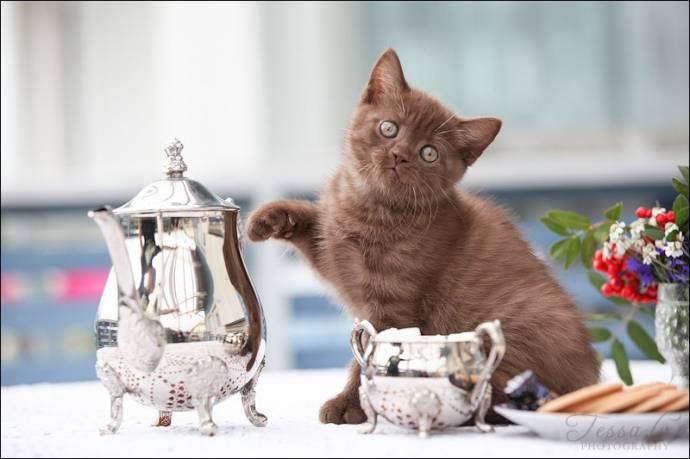 Клейкая лента если кошка лезет на стол