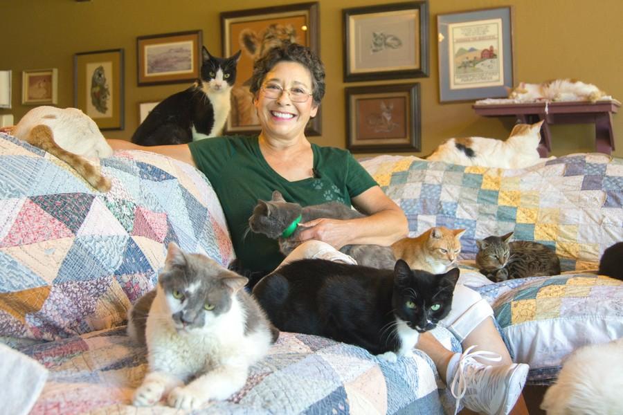 Ветеринар приютила в своем доме 1100 кошек У 67-летней Лини Латтанцио по-настоящему огромное сердце
