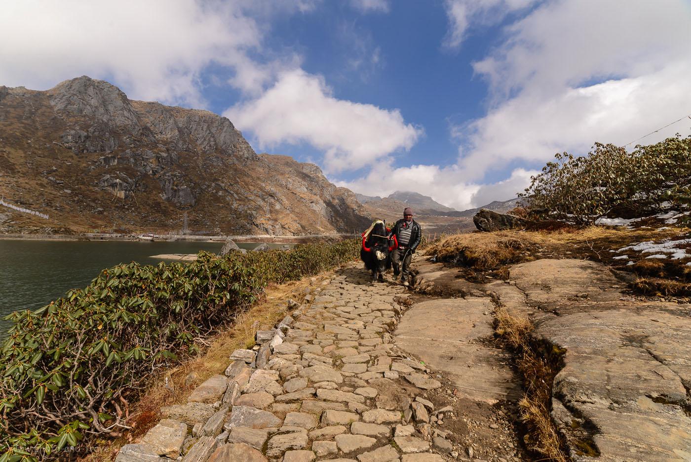 Снимок 8. Экологическая тропа вдоль берега озера Тсомго в Индии. Отчет о поездке в штат Сикким. 1/320, -1.33, 9.0, 100, 14.