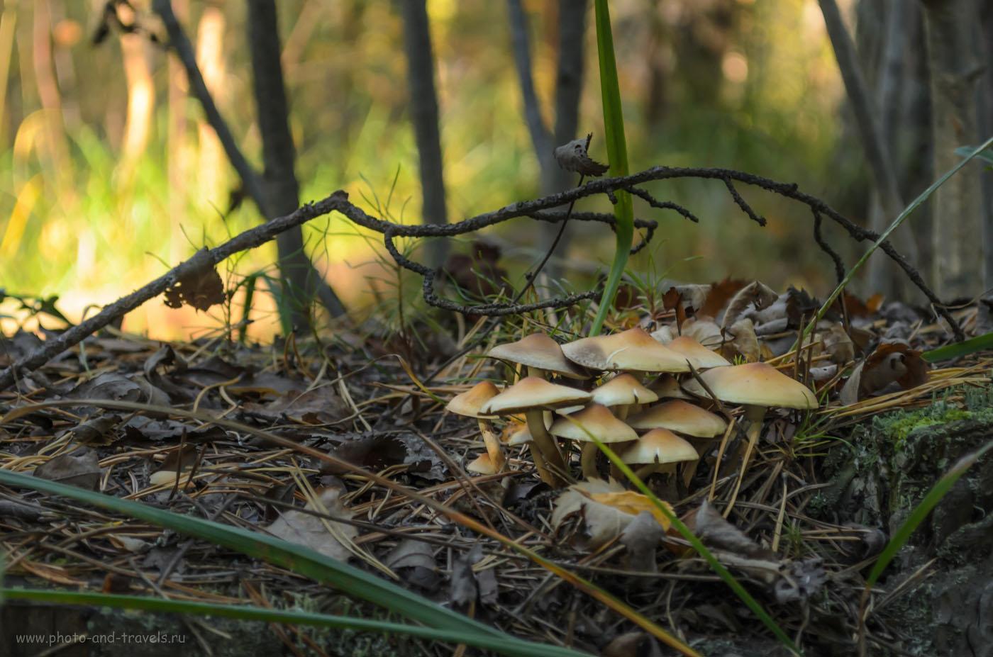 12. Природный парк Бажовские места. Не ешь грибочки!