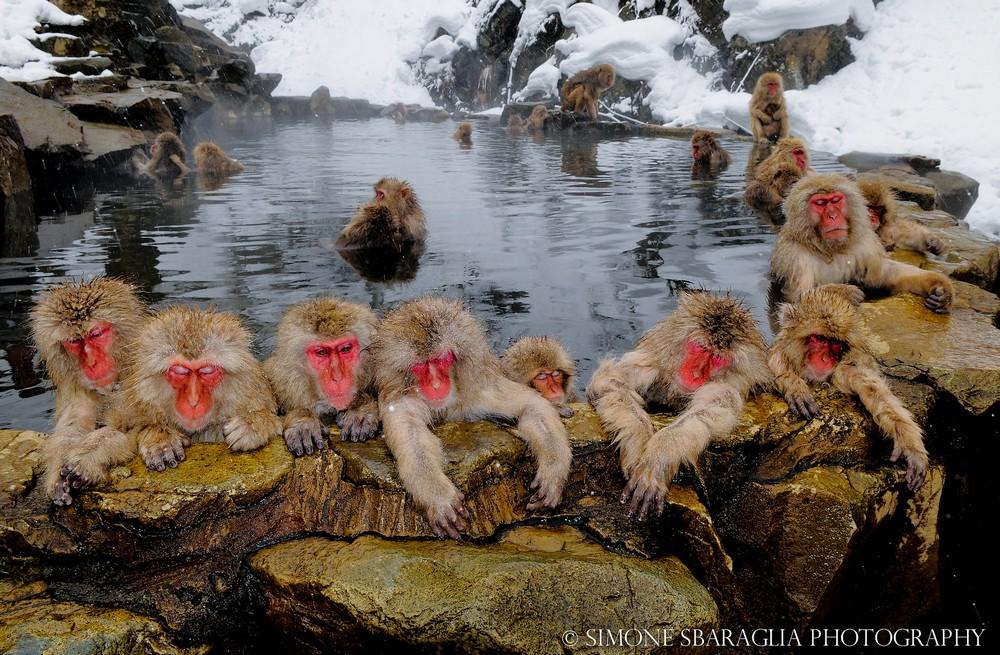 Дикая природа на снимках Саймона Сбараглиа