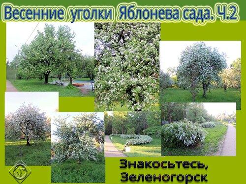 Весенние уголки Яблонева сада. Ч.2