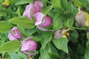 Весенне цветущие - Страница 12 0_16ed31_3cbb8c58_M