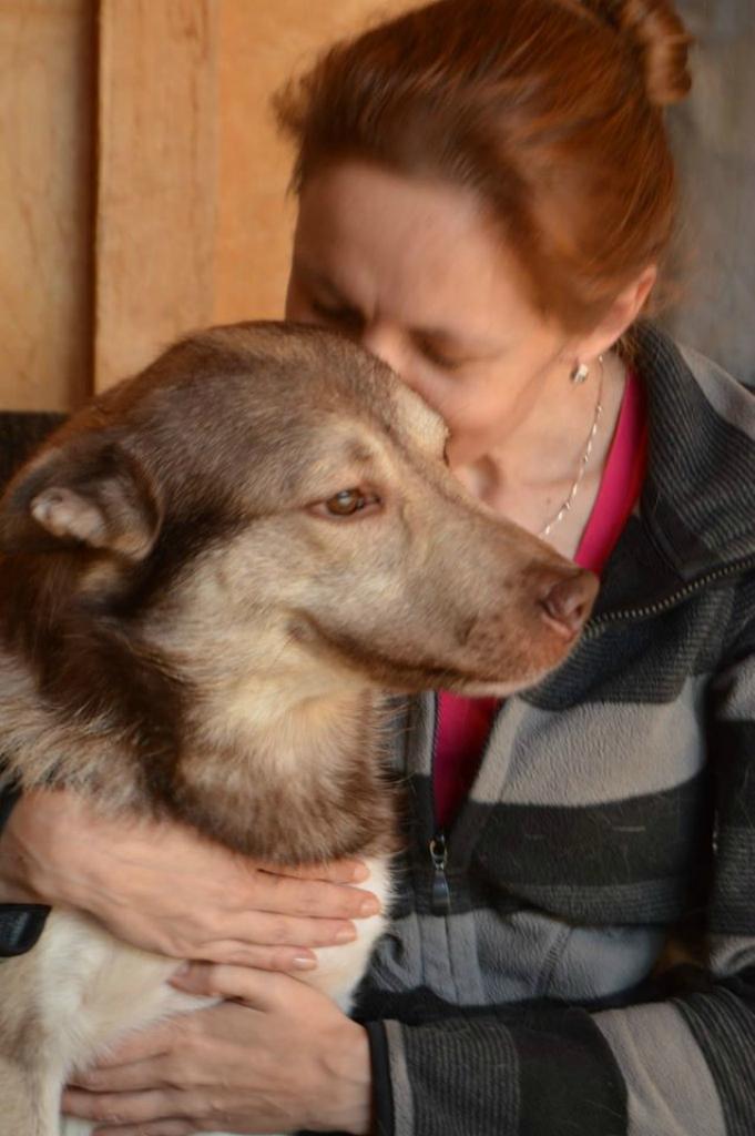 Шерлок (Ави) собака из приюта догпорт