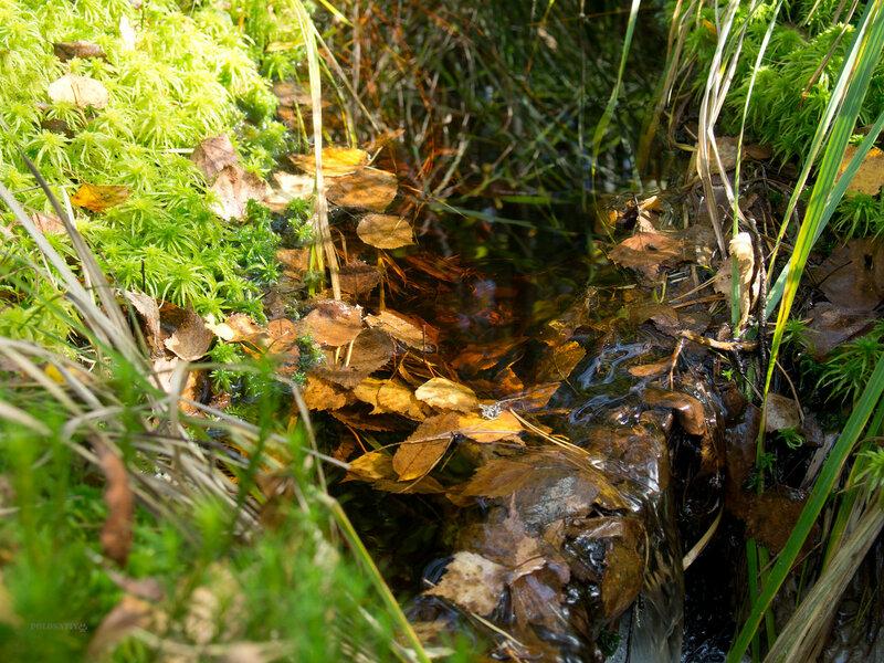 Лес под Толмачёво