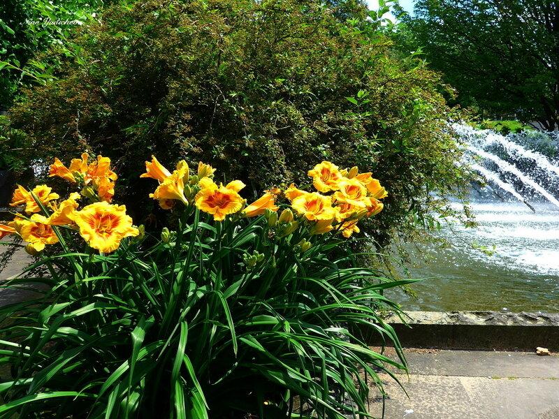 Лилейник и фонтан