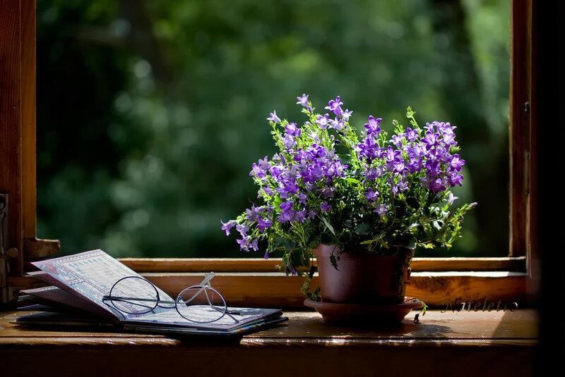 972455_flowers.jpg