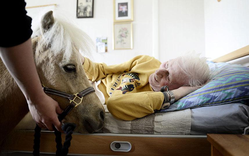 10. Либерта Мехмеди уверена, что общение с животными вызывает у пациентов положительные эмоции, дающ
