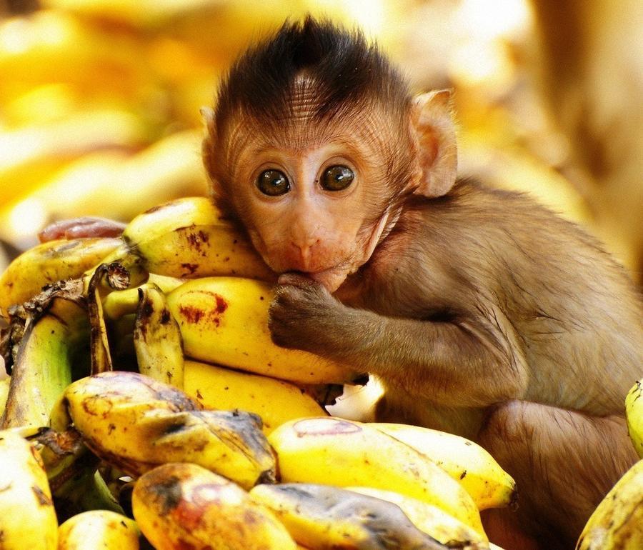 13. И 1,5 миллиарда бананов.