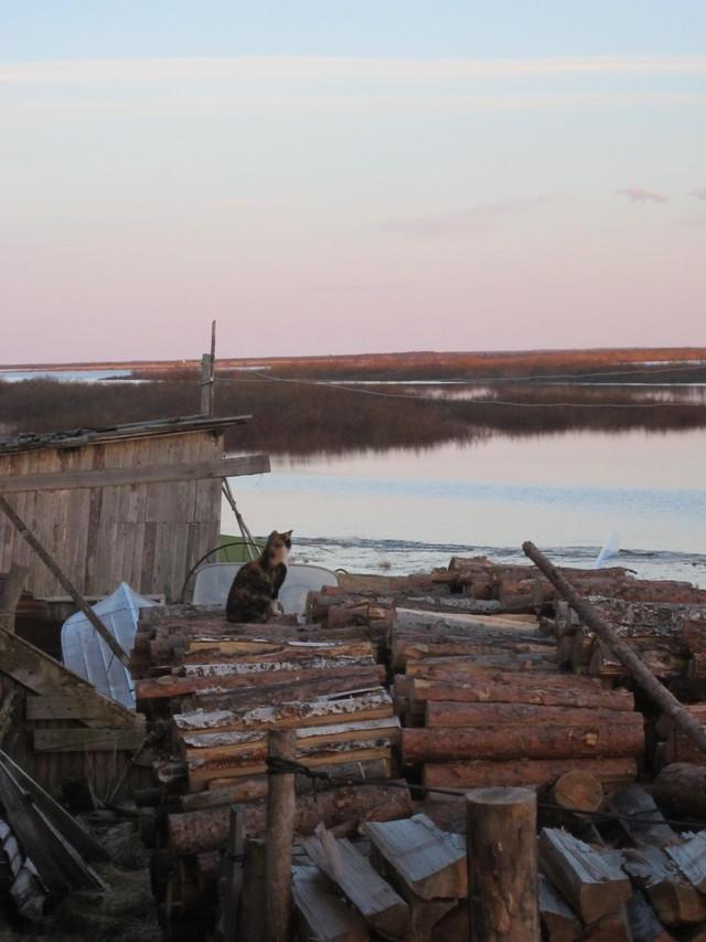 62. На обратном пути взяла охапку дров. Если с вечера не положить дрова на просушку в печку, то прид