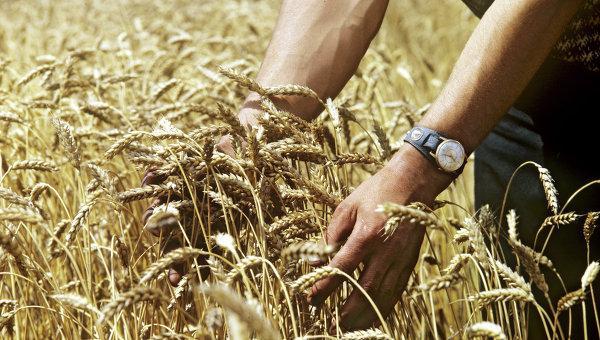 Украина может экспортировать рекордное количество зерна