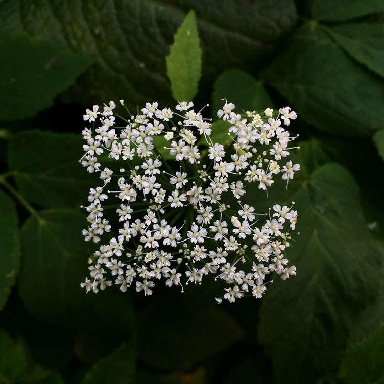 The square flowers of Baku Maeda