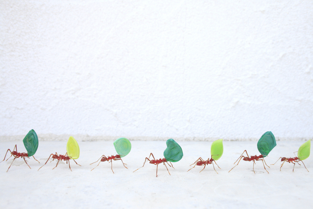 Glass Insects and Plants Sculpted to Scale by Japanese Artist Yuki Tsunoda