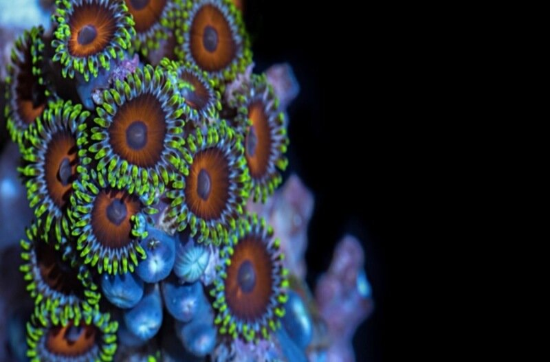ВИДЕО: Макросъемка движения морских кораллов