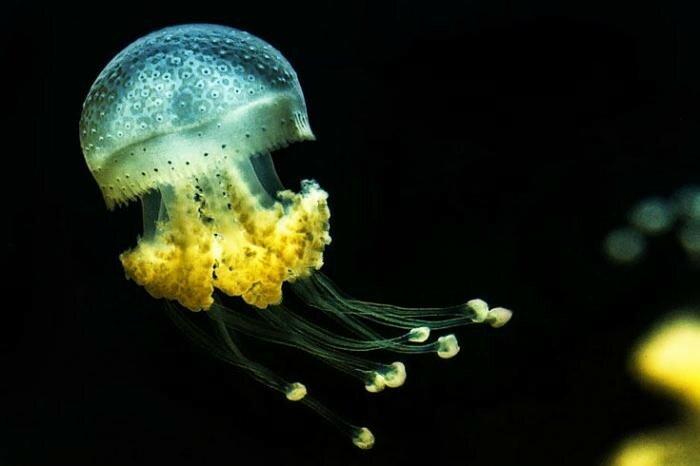 Очень красивые медузы   фотоконкурс журнала «Штерн» (Германия)