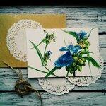 Цветы и другие растения
