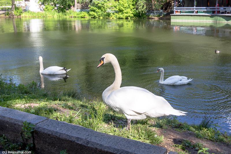 Москва. Лебедь в Парке Горького