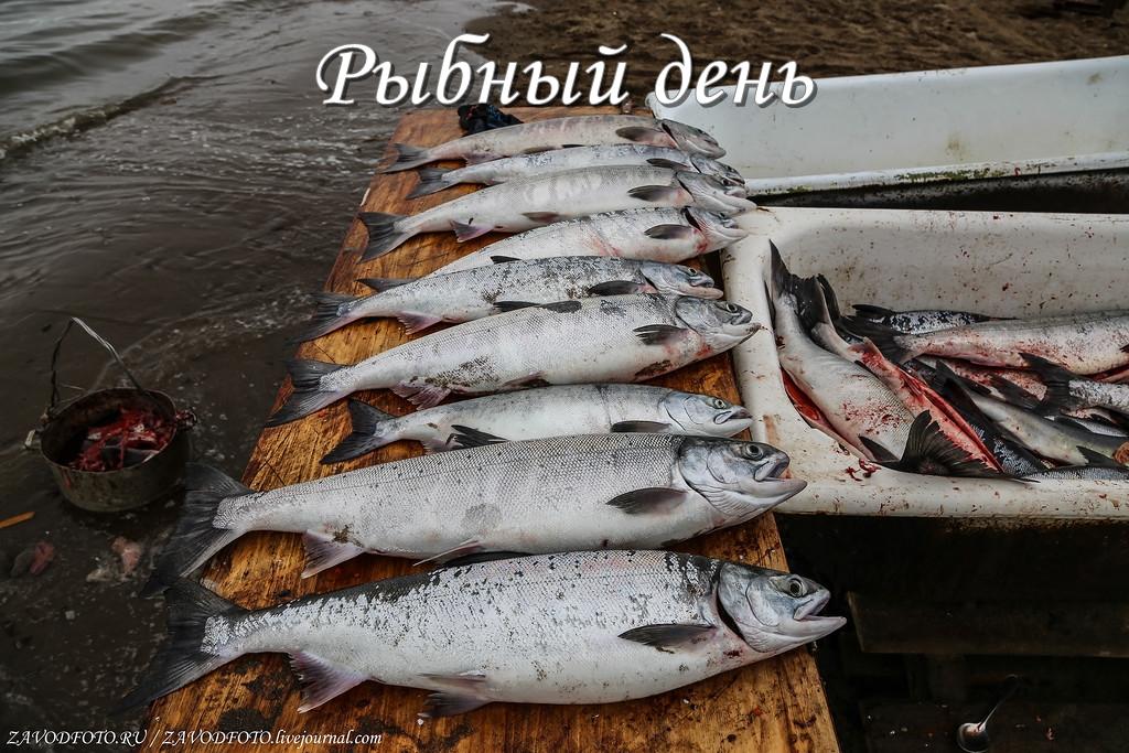 Рыбный день.jpg