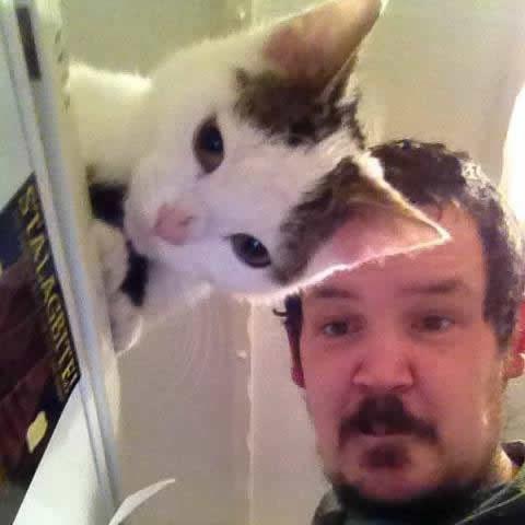 Кажется, будто ухо у котика прозрачное.