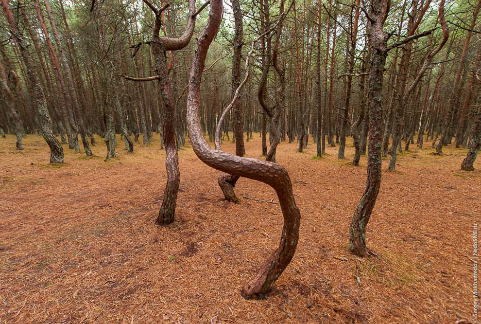 Какая-то сила начинает скручивать деревья: