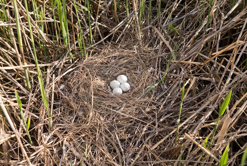 20. Ну а в-третьих, это в мае гнездо кажется, что на виду. Буквально через пару недель его трос