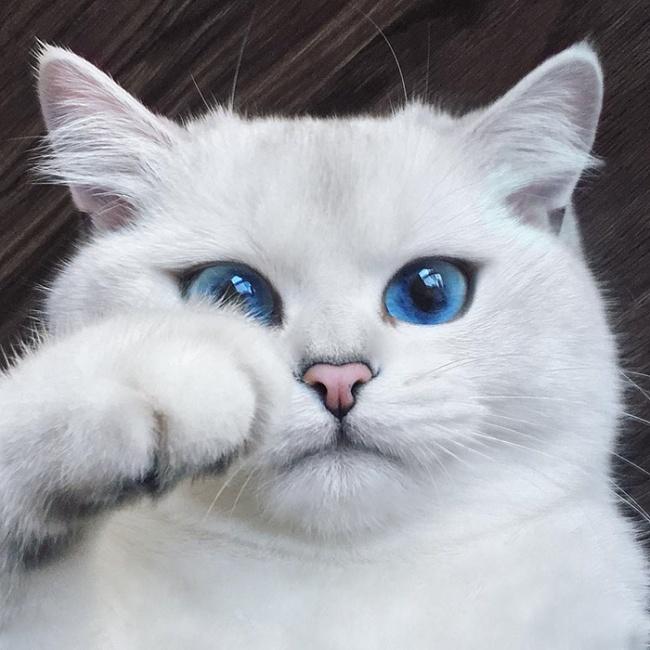 Уэтого кота самые красивые глаза насвете (17 фото)