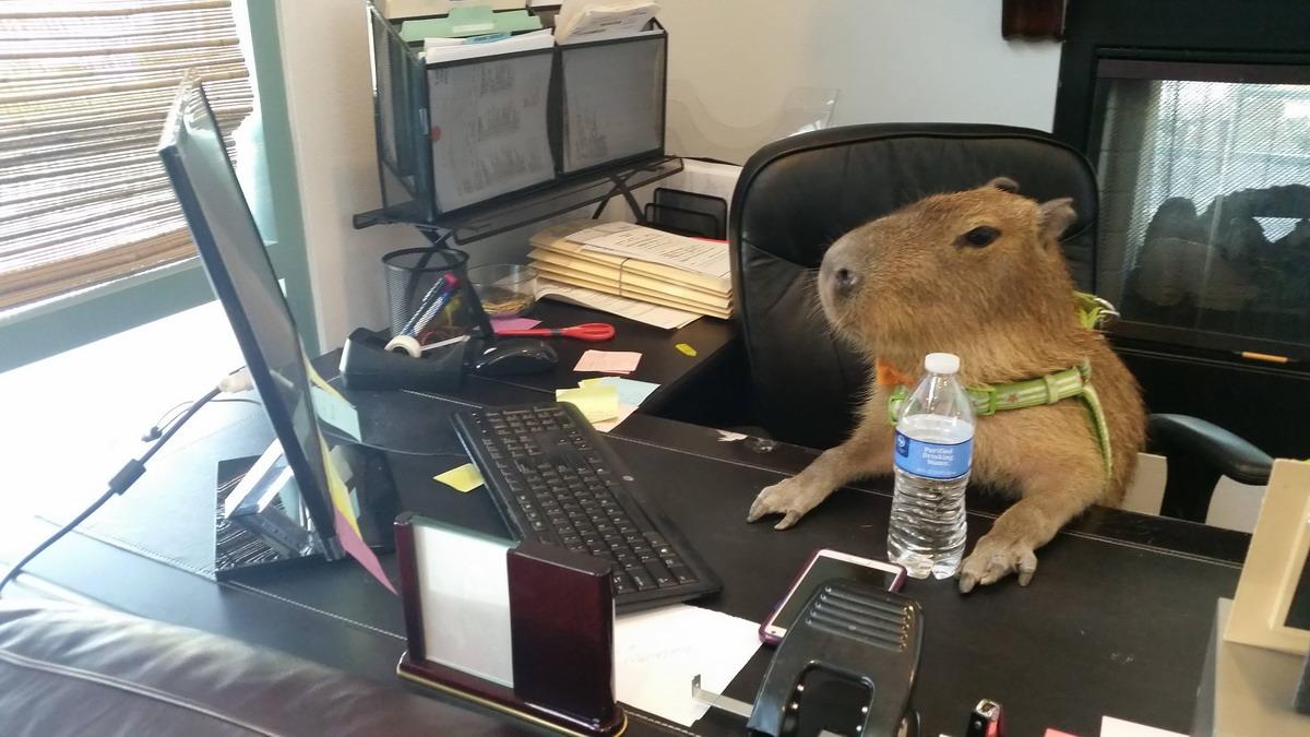 Прикольные картинки животных про работу, приколы про животных