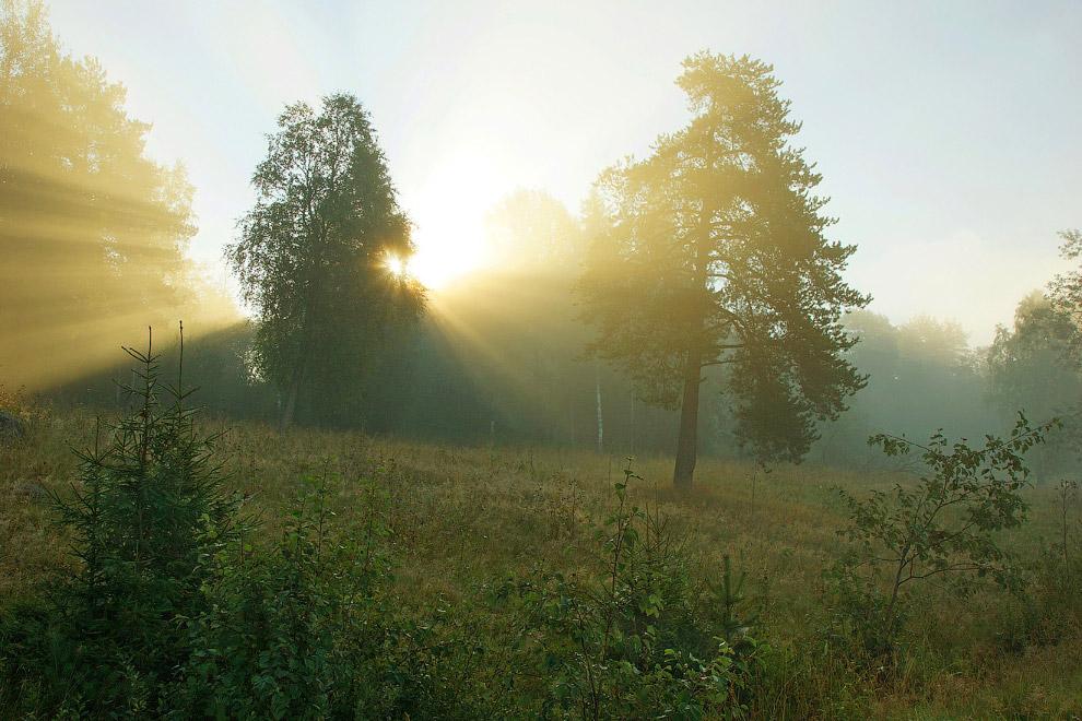 3. Парк славится как место, которое ещё не тронула рука человека, однако большое количество лес