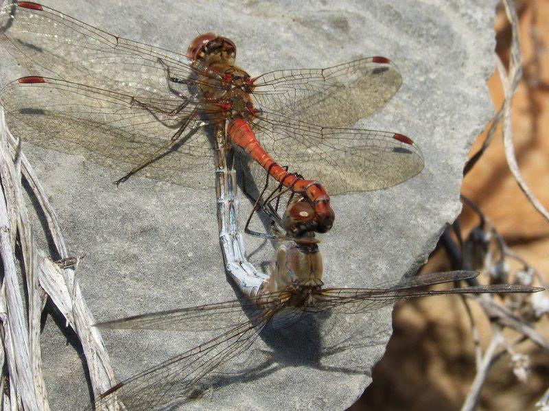Ученые поведали о выгоде поедания насекомых