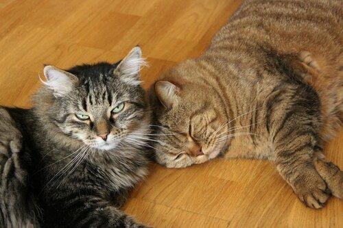 Мои дружные котишки