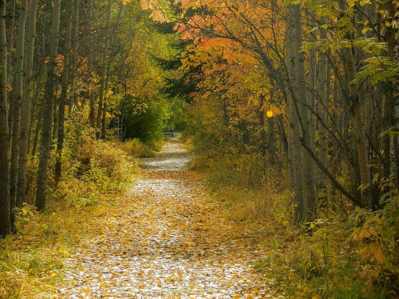 В старом парке заблудилась осень