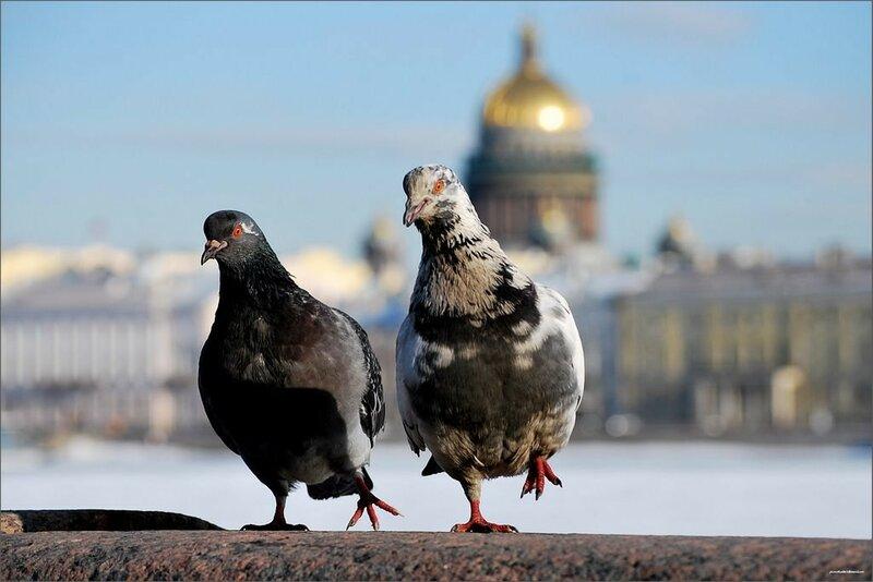 162. Сергей Ворошилов Дамы приглашают кавалеров