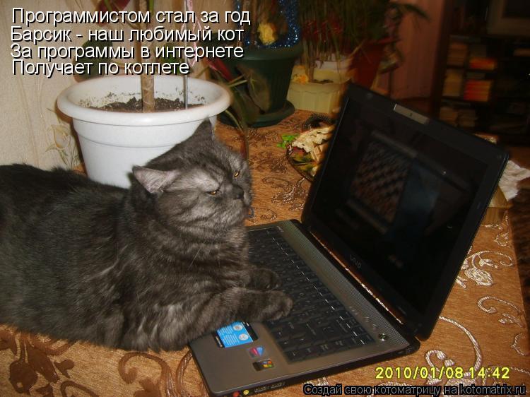 Открытки С днем программиста! Васька - программист