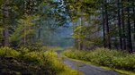 Дорога через заворожённый лес...