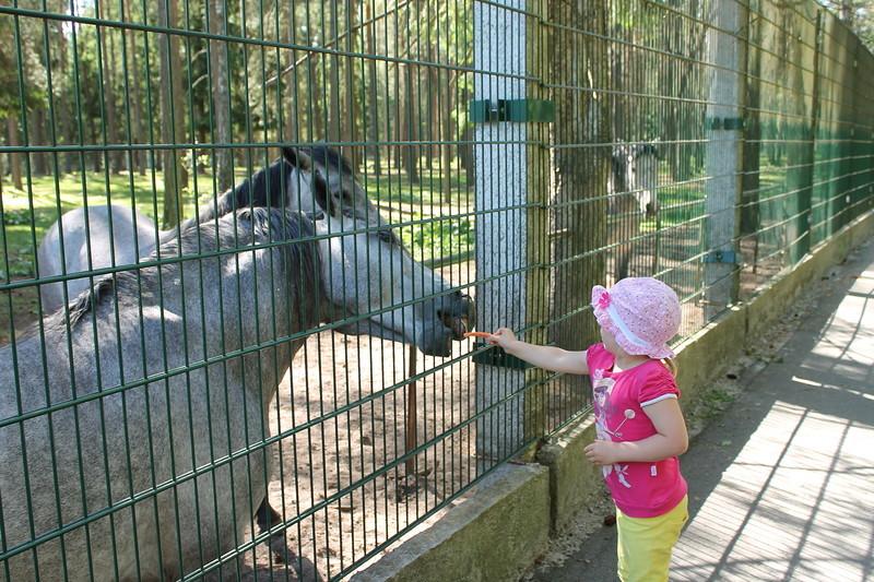 Валери больше всего впечатлили лошадки.